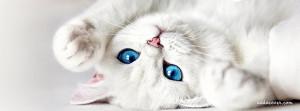 12704-white-kitten.jpg