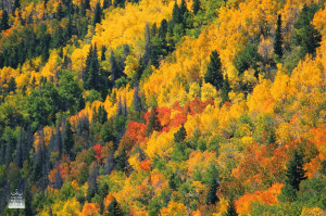 COOL Nights Produce WARM Fall Color. Leaves Changing Color Quotes ...