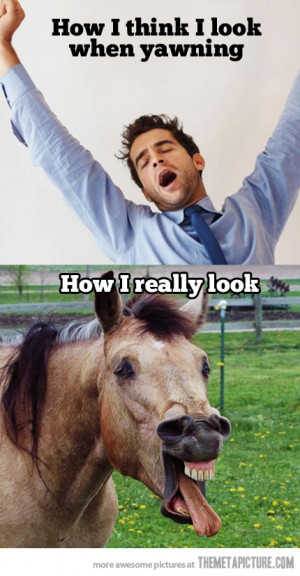 Funny photos funny horse derp face yawn