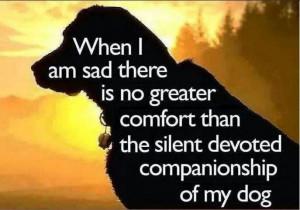 Dog companionship.