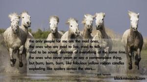 wild ones horse quote