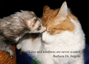 love-quote-barbara-de-angelis.jpg