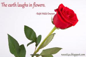 rose quotes wallpaper noexit4u blogspot com love rose wallpaper quotes ...
