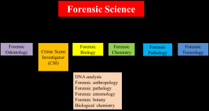 And just a reminder, you are a forensic odontologist now. We shall ...