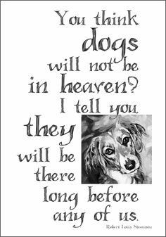 who has passed away under every fathomable circumstance cat, dogs, dog ...