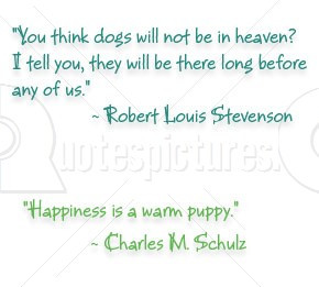 you Think Dogs will not be in Heaven – Animal Quote
