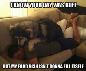 ruff_day_funny_picture