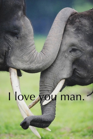 ... love you quotes # animals # animal # animal quotes # elephants # cute