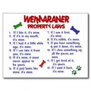 292. Weimaraner Property Laws 2 Postcard
