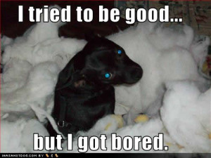 Dog Quotes Funny Dog Quotes and Sayings