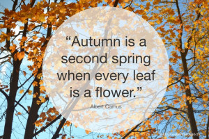 Beautiful Autumn day ...