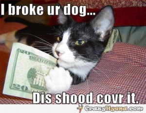 funny-cat-broke-your-dog.jpg