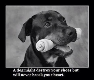 Cute dog quote