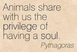 pythagoras quotes - Google Search