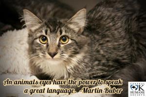 ... , Martin Buber, Human Cat, Foster Rescue, Rescue Cat, Buber Adoption