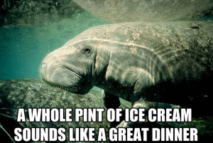 "Calming Manatee "" is the single most greatest thing on the internet ..."