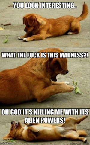 Funny dog pictures thread