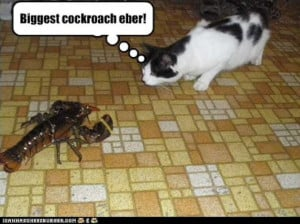 Funny Cockroach Compilation (12 Pics)