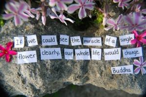 random,buddha,buddhist,quotes,words,quote ...