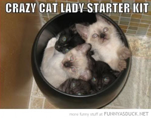 crazy cat lady starter pack animals lolcats kittens bin funny pics ...