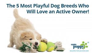 Most Playful Dog Breeds