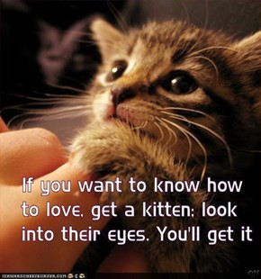 Kitten Love You Quotes