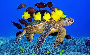 Underwater Fish And Turtle Animals Wallpaper 16530 Wallpaper