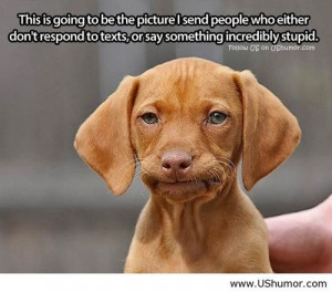 Dog's silly face US Humor - Funny pictures, Quotes, Pics, Photos, I...