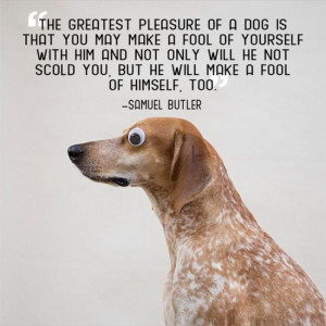 Great Quotes About Pets (21 pics)