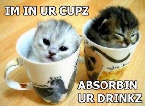 Funny white kittens Cute Kittens in Cups pictures online