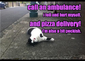 Funny ~ Cat ~ Humour ~ Quotes