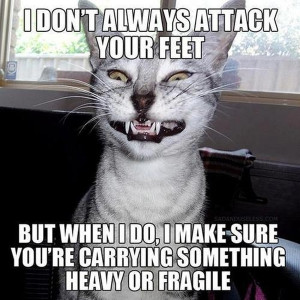cat-humor-funny-i-dont-always-attack-your-feet-cat-meme.jpg
