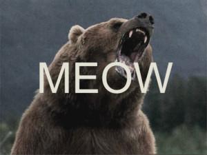 ... grizzly bear mountains bear wildlife meow Northwest black bear