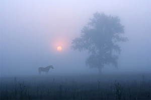 Horse in the Morning Fog - Vadim Trunov