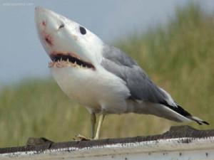 Funny Seagull New Photos 2011