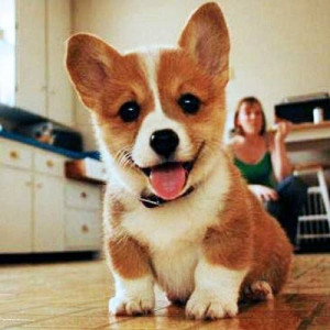 Happy Dog - Dogs Picture