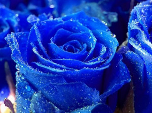 Gorgeous Roses: The Meaning of Rose Colors [35 PICS]