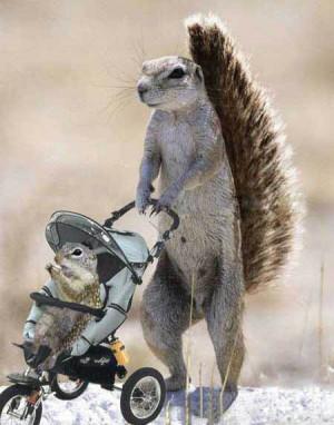 Funny Squirrel (14)