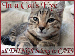 Cute Cat Quotes and Sayings