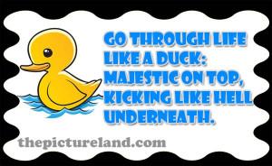 Funny Duck Sayings