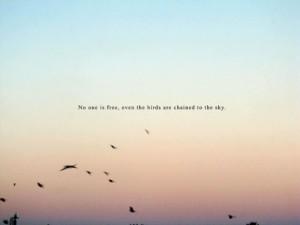 birds, photography, sky, text