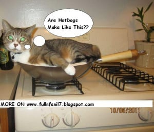 links 1 31 funny animals pictures with funny text 2 funny animals ...