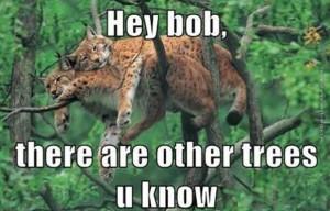 Tags: Clingy , Cougar , Tree