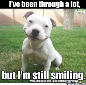 Smiling Dog Is Smiling