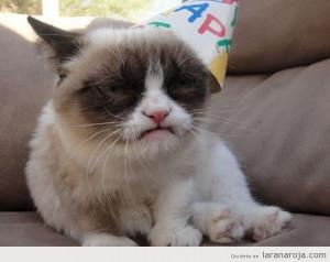 Imagen divertida de grumpy cat o gato gruñón con gorro de ...