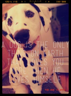 Dalmatian quotes