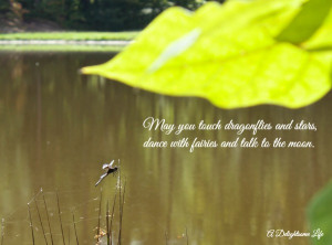 walk-in-the-woods-dragonfly-quote