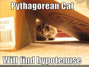 ... 4f2322f8ea1192a439dd7f797938db6f-funny-pictures-pythagora-cat-box.jpg