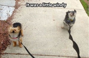 Windy Weather