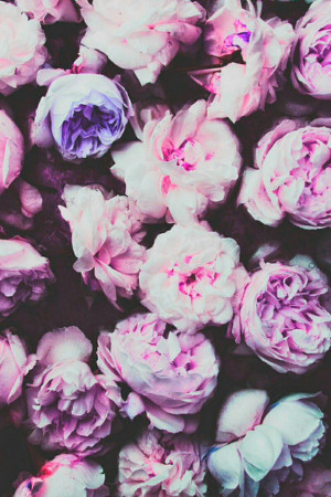 flowers, hipster, indie, iphone wallpaper, nature, night, pink, retro ...